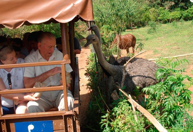 Casal de idosos alimentando os avestruzes do hotel fazenda campo dos sonhos com as propias mãos