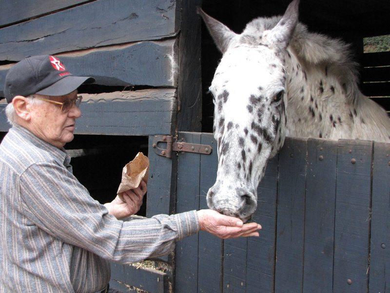 Um homem já de idade, alimentando um cavalo com a própia mão