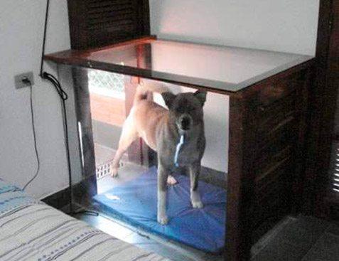 Cachorro entrando na parte interna do chalé pelo acoplamento do canil