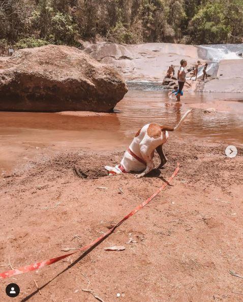 Cachorro escondendo a cabeça na areia da cachoeira do hotel fazenda parque dos sonhos