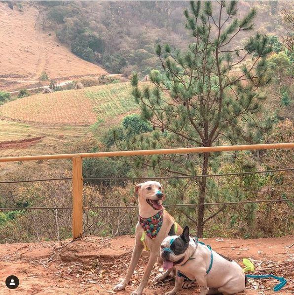 Cachorros esperando seu dono na chegada da tirolesa voadora do hotel fazenda parque dos sonhos