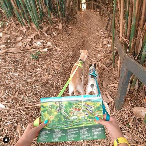 Levandos os cachorros para as trilhas do hotel fazenda parque dos sonhos