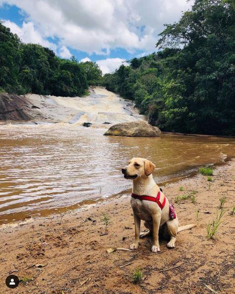 Cachoro na Pedra da Cachoeira do Parque dos Sonhos Hotel Fazenda Pet Friendly em Socorro-SP