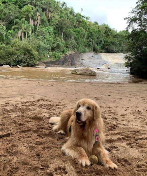 Cachorro na areia da Cachoeira do Parque dos Sonhos Hotel Fazenda Pet Friendly em Socorro-SP