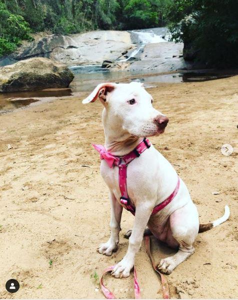 Cachoro na areia da Cachoeira do Parque dos Sonhos Hotel Fazenda Pet Friendly em Socorro-SP